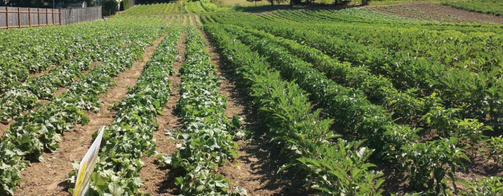 farm-rows